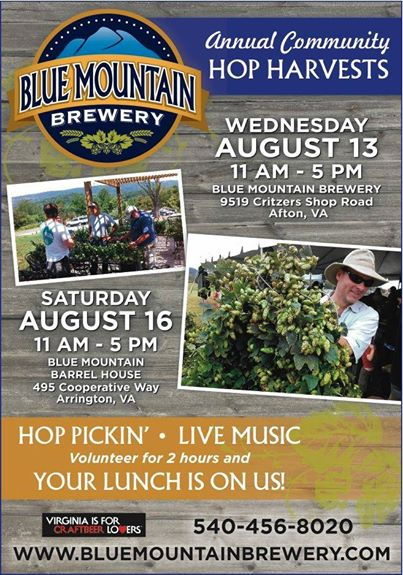 Rose Isle Farm Joins Blue Mountain Brewery for Hop Pickin Time August 2014